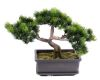 Bonsai factice Formosa H 22 cm