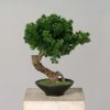 Bonsai factice Pinus H 38 X 30 cm Pot coupe en ceramique qualitatif