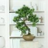 Bonsai factice Pin des Boudhistes H 50 X 40 cm Pot ceramique qualitatif